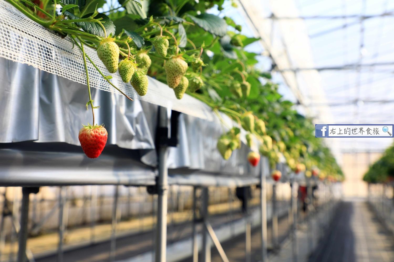 島根旅遊-現採草莓吃到飽.銷魂草莓甜點冰品:Kinta農園BERRYNE(きんた農園ベリーネ) @愛旅行 - 右上的世界食旅