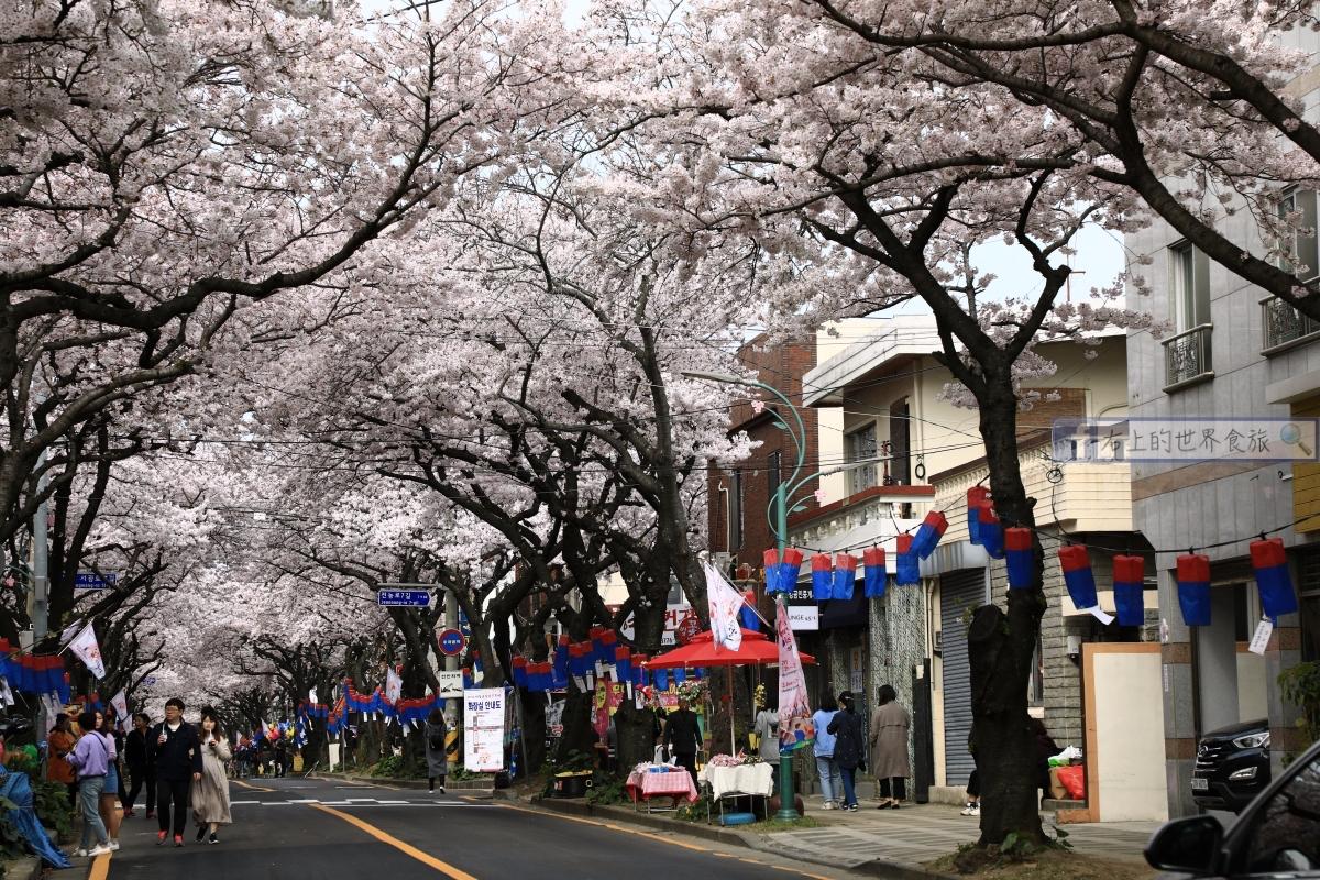 濟州島旅遊-典農路櫻花大道,賞櫻必去!逛市集、吃小吃,春天限定活動超好玩