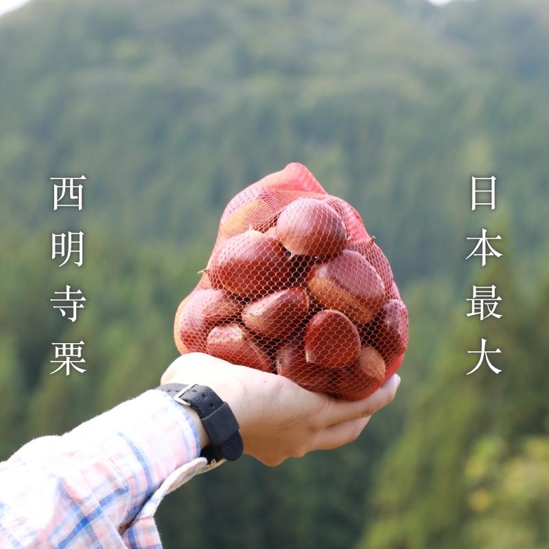 日本第一大浮誇系栗子:西明寺栗採到飽-秋田 佐佐木栗園