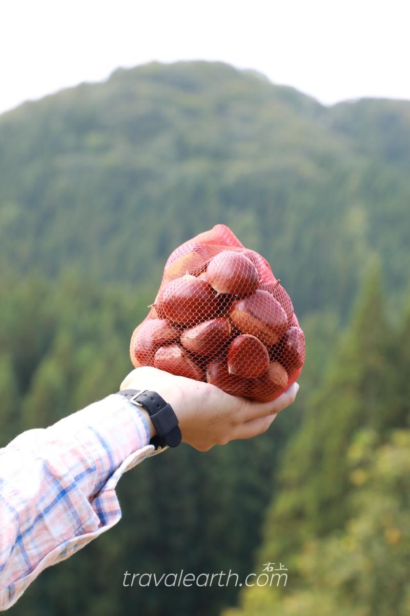 日本第一大浮誇系栗子:西明寺栗採到飽-秋田 佐佐木栗園 @右上的世界食旅