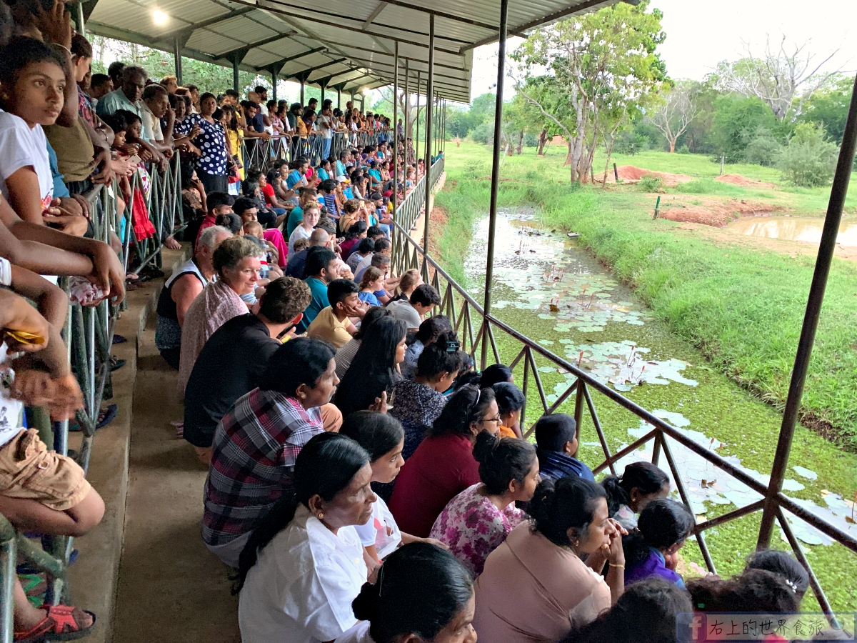 斯里蘭卡10-必訪大象孤兒院.入住帳篷飯店&Udawalawa住宿推薦 @右上的世界食旅