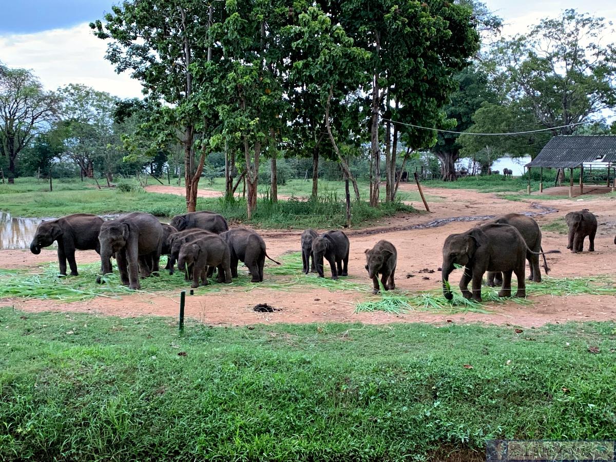 斯里蘭卡10-必訪大象孤兒院.入住帳篷飯店KOTTAWATTA VILLAGE