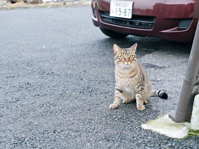 鳥取旅遊-貓奴最愛!看貓秘境、300円吃漁家特產超飽足:御崎漁港玩貓之旅 @右上世界食旅