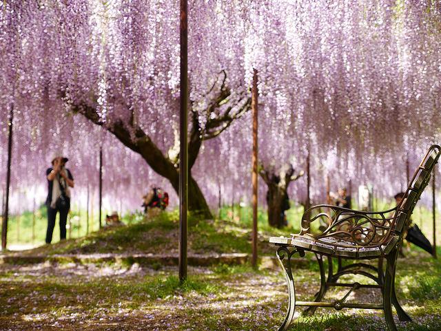 神戶.姬路旅遊懶人包|超過50處住宿、美食、景點、購物全攻略 @右上的世界食旅