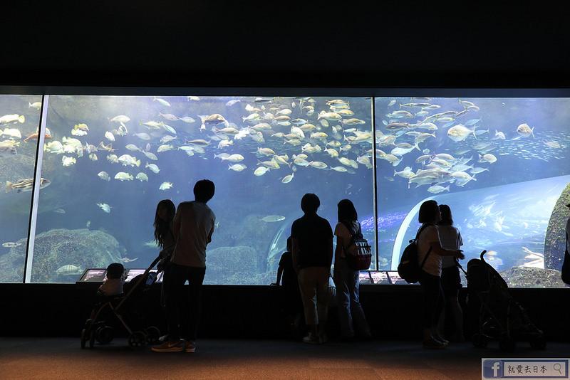 【新潟旅遊】新潟水族館marinepia日本海:2萬種水中生物,天天看企鵝、海獺、海獅餵食秀 @就愛去日本 - 右上的世界食旅