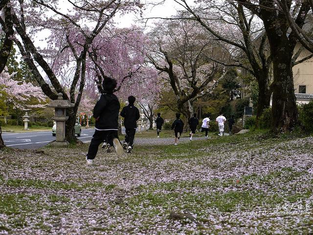 關西賞櫻9天行程:大阪、京都、奈良、宇治、滋賀 @右上的世界食旅
