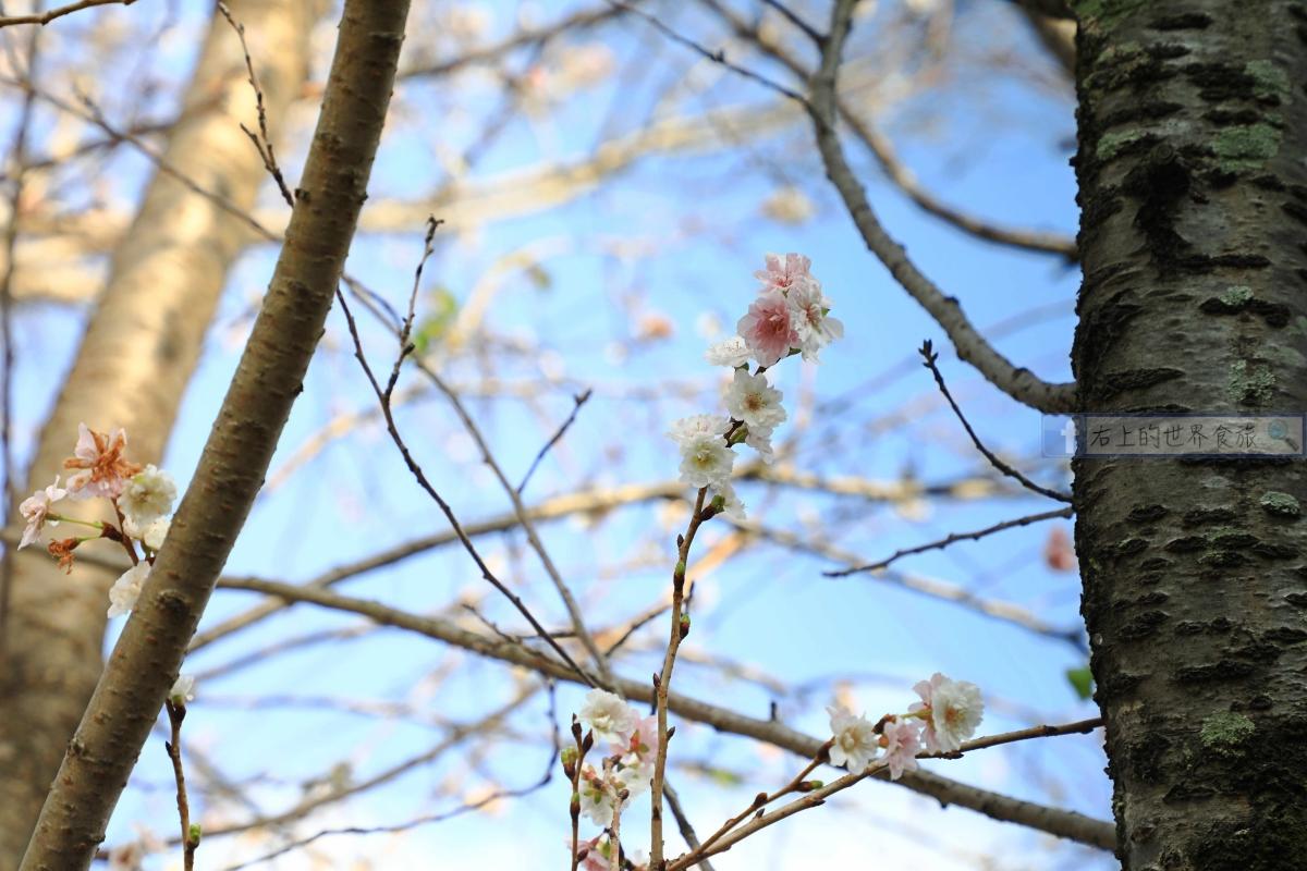 日本必遊第一名城:姬路城,秋楓春櫻關西最佳景點,每年500萬人潮絡繹不絕 @右上的世界食旅