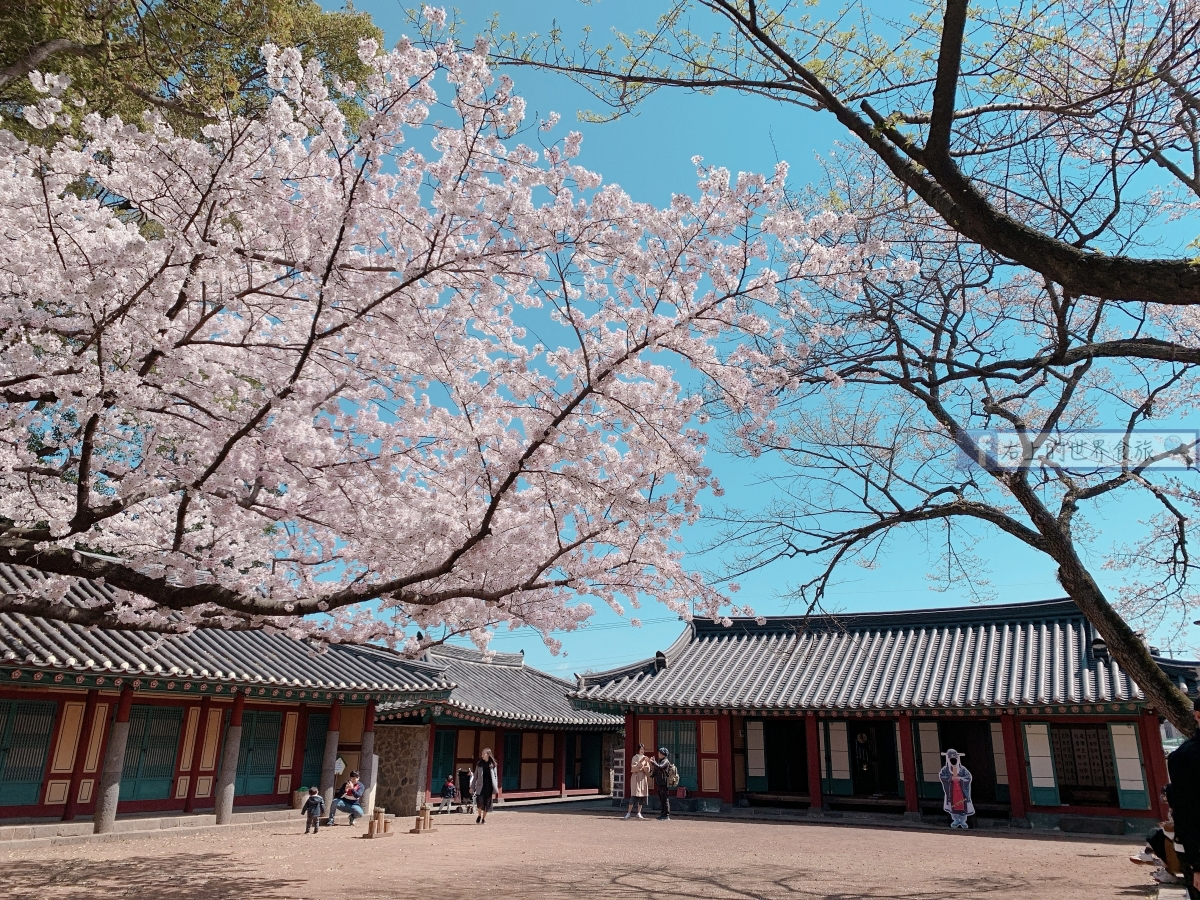 濟州島-免費賞櫻勝地:新山公園&三姓穴