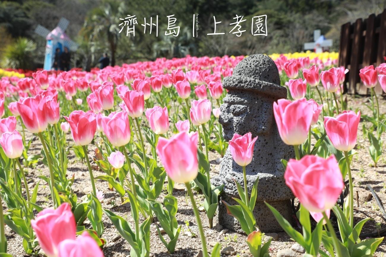 濟州島賞花-穿高跟鞋也好走,網美照拍到手軟的人氣景點:上孝園