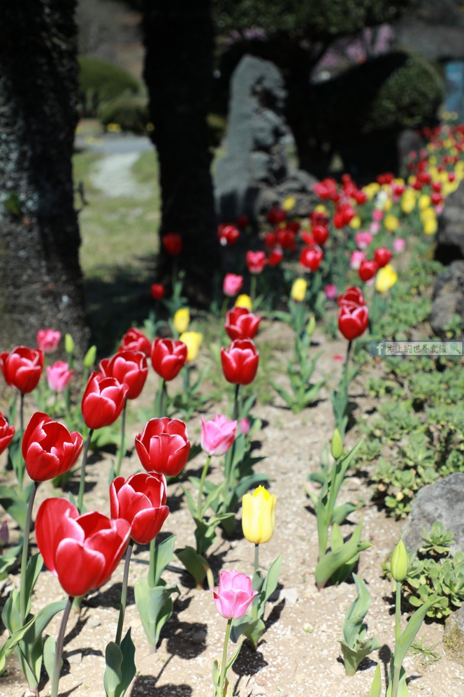 濟州島賞花-穿高跟鞋也好走,網美照拍到手軟的人氣景點:上孝園 @右上的世界食旅