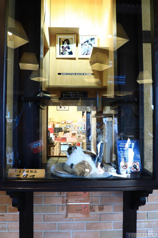貴志貓車站半日旅-必訪貓站長小玉.主題列車.貓奴夢想之地:和歌山電鐵貴志川線 @右上的世界食旅