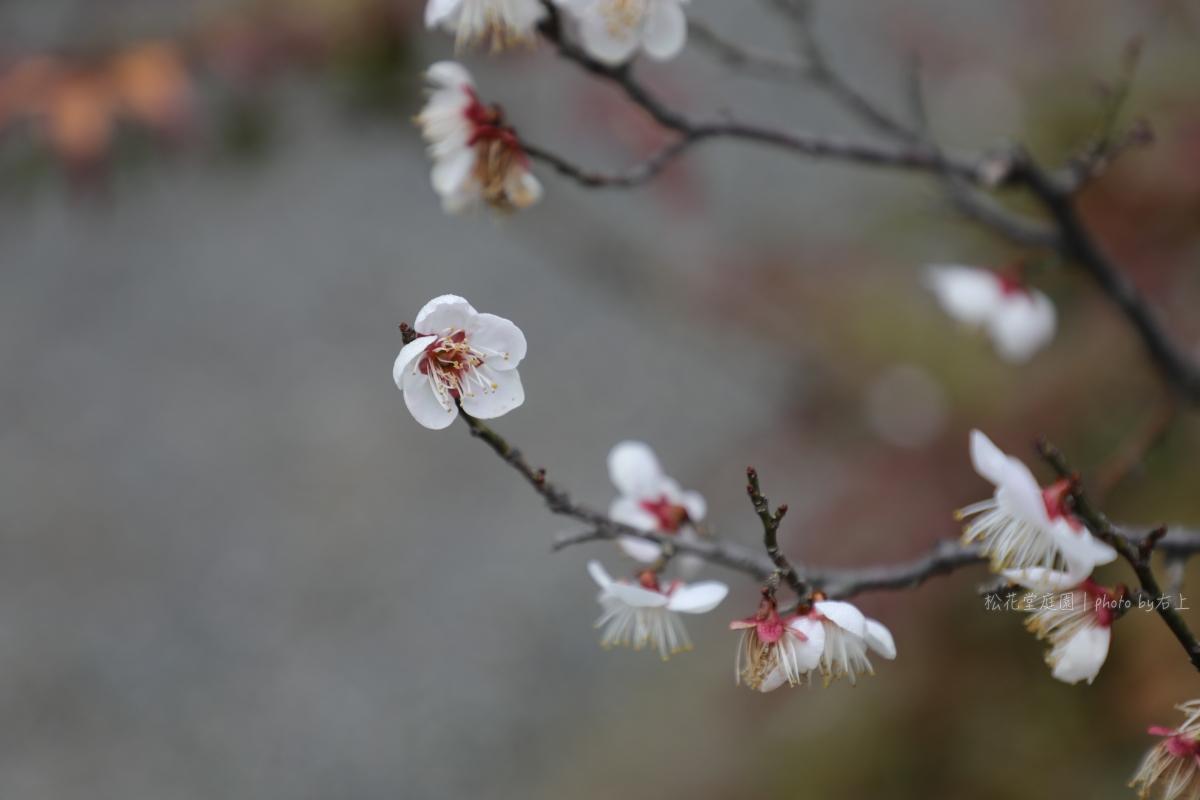 不排隊不預約輕鬆吃米其林三星:京都吉兆 松花堂店-松花堂庭園半日行 @右上世界食旅