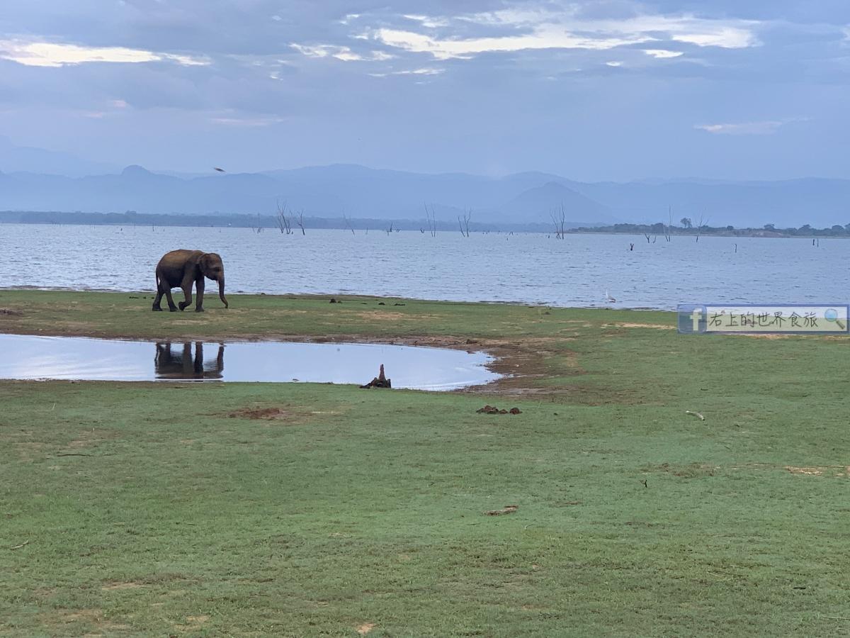 斯里蘭卡11-Udawalawe野生動物園