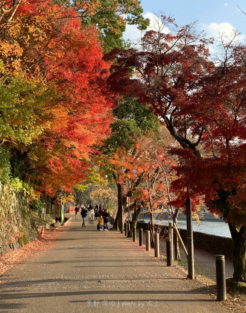 京都最美的河畔:走吧!來宇治川賞櫻.賞楓 @右上的世界食旅