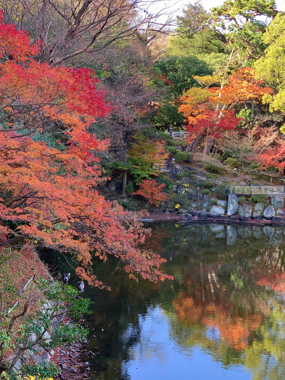 和歌山旅遊|和歌山城:日本百大名城.西之丸庭園的楓葉超級美! @右上的世界食旅