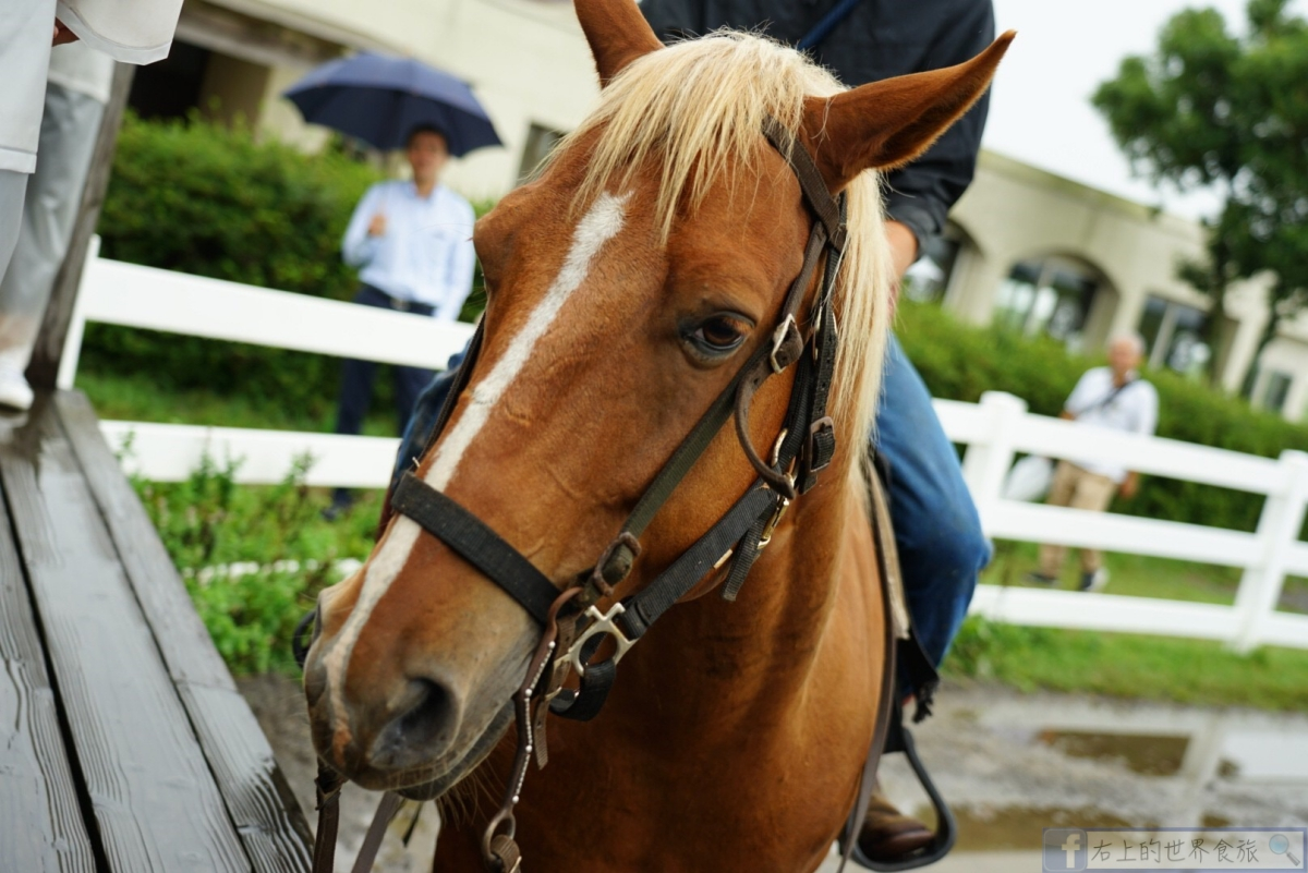熊本 阿蘇火山草原騎馬體驗.英文教學.入住享受牧場風情:EL PATIO RANCH牧場 @愛旅行 - 右上的世界食旅